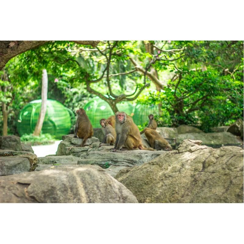 Остров обезьян - фото 2 - 001.by