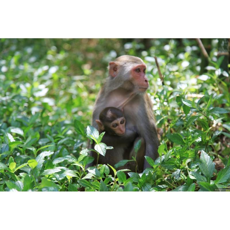 Остров обезьян - фото 3 - 001.by