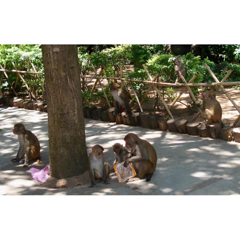 Остров обезьян - фото 4 - 001.by