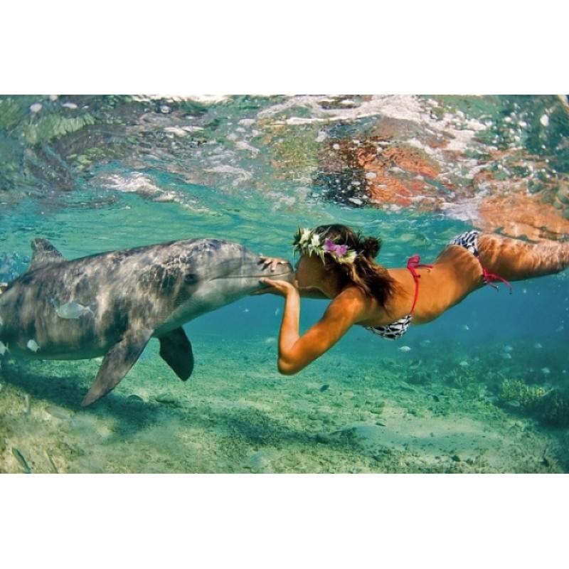Купание с дельфинами на Кубе