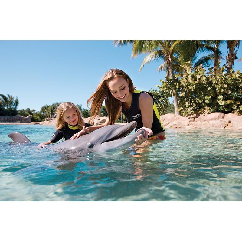 Купание с дельфинами в Доминикане