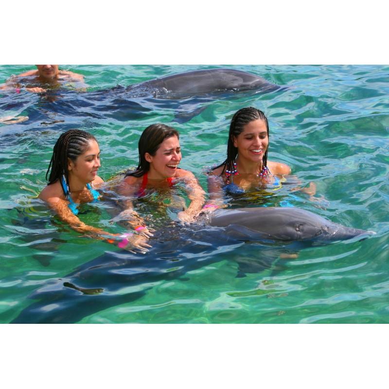 Плавание с дельфинами в Доминикане - фото 4 - 001.by
