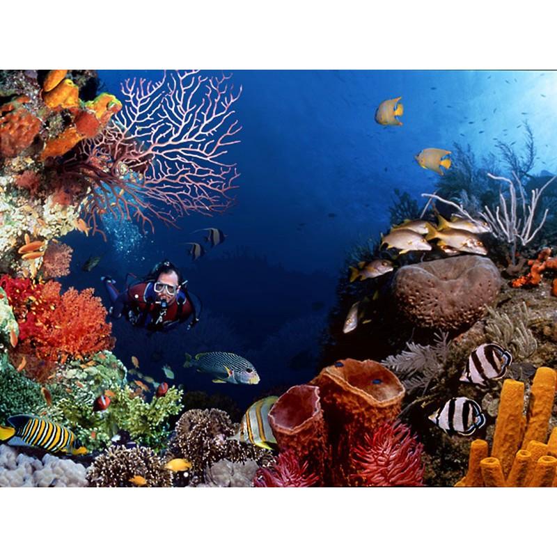 Дайвинг в Египте: подводные приключения для всех желающих - фото 2 - 001.by