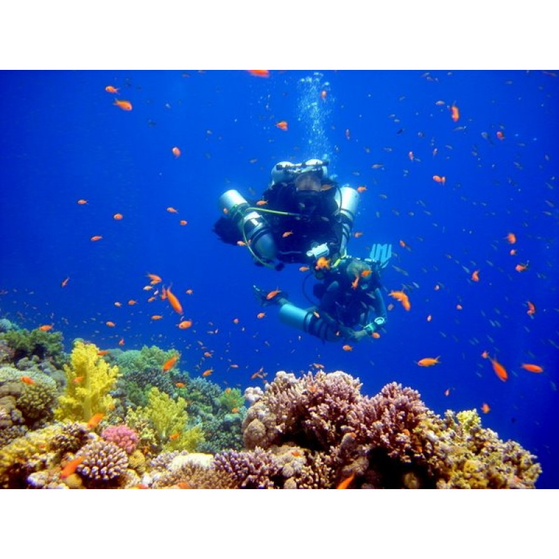 Дайвинг в Египте: подводные приключения для всех желающих - фото 4 - 001.by