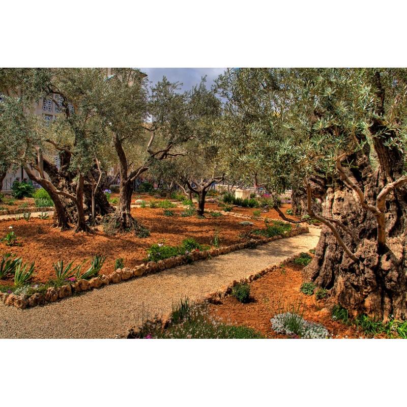Иерусалим - фото 3 - 001.by