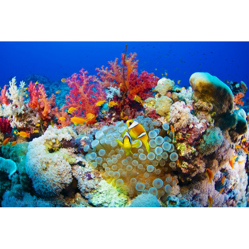 Красное море - фото 3 - 001.by