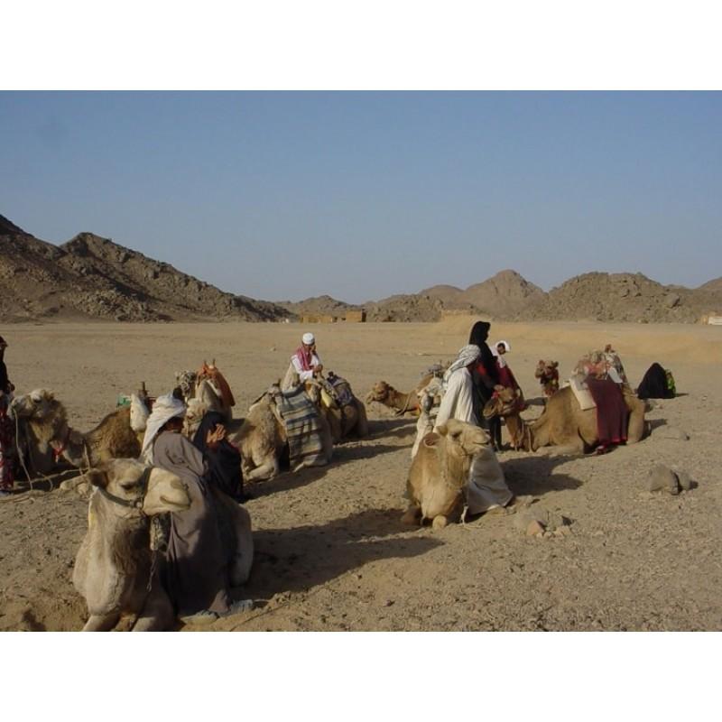 Сахара-парк: отдых на максимум!  - фото 1 - 001.by
