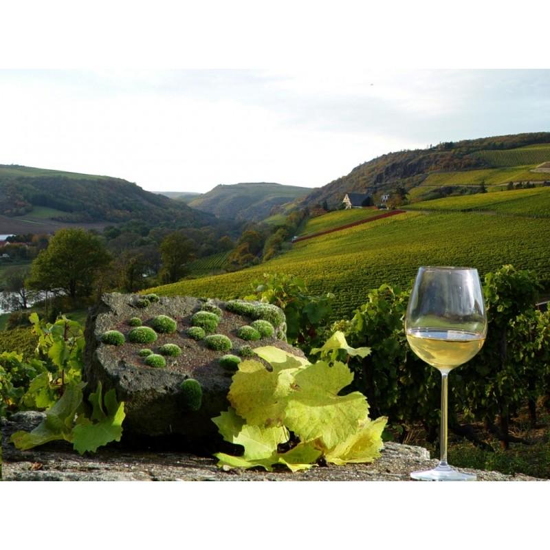 Экскурсия Дорога вин