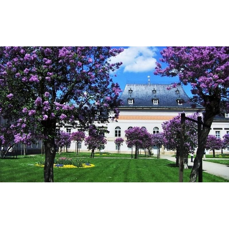 Парк бывшей королевской резиденции Пильниц - фото 2 - 001.by