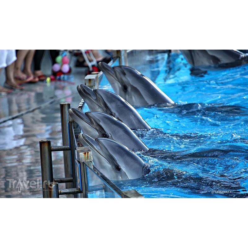 Батумский Дельфинарий - фото 4 - 001.by