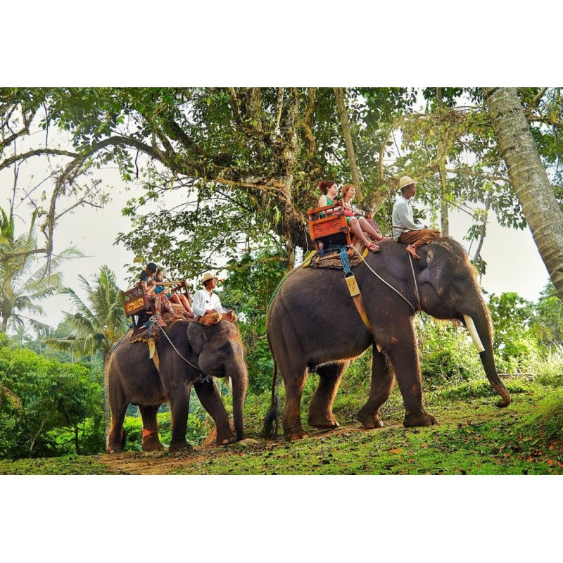 Катания на слонах в Индии