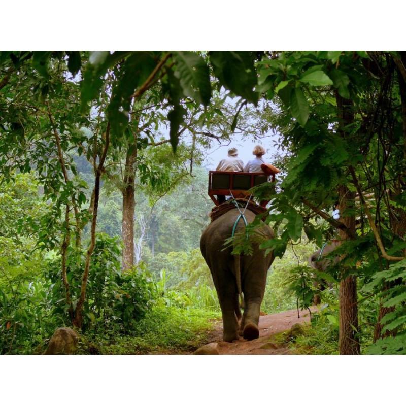 В джунгли к слонам - фото 2 - 001.by