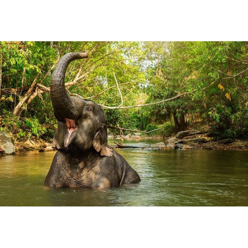 В джунгли к слонам - фото 3 - 001.by