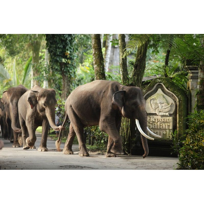В джунгли к слонам - фото 4 - 001.by