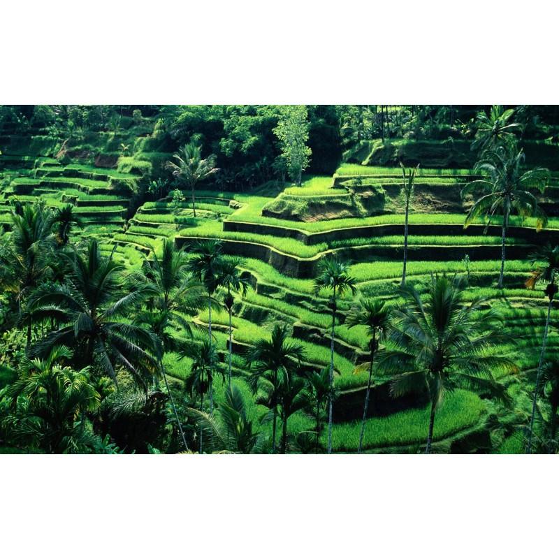 Индонезия. Мир наизнанку - фото 4 - 001.by