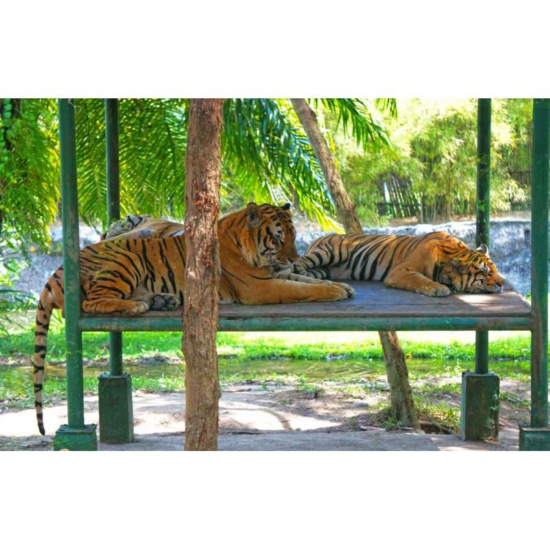 Сафари-парк Бали - фото 4 - 001.by