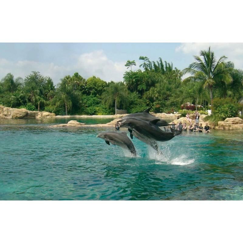 Купание с дельфинами в Карибском море