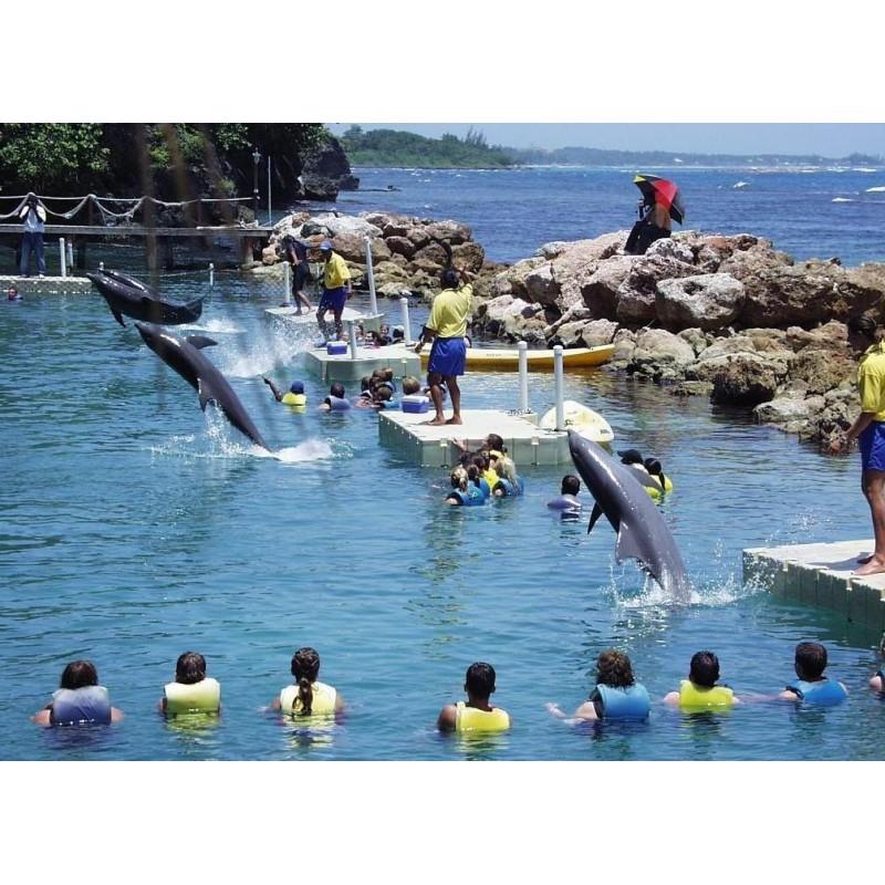 Купание с дельфинами в Карибском море  - фото 2 - 001.by