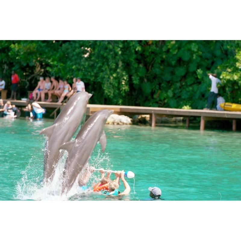 Купание с дельфинами в Карибском море  - фото 4 - 001.by