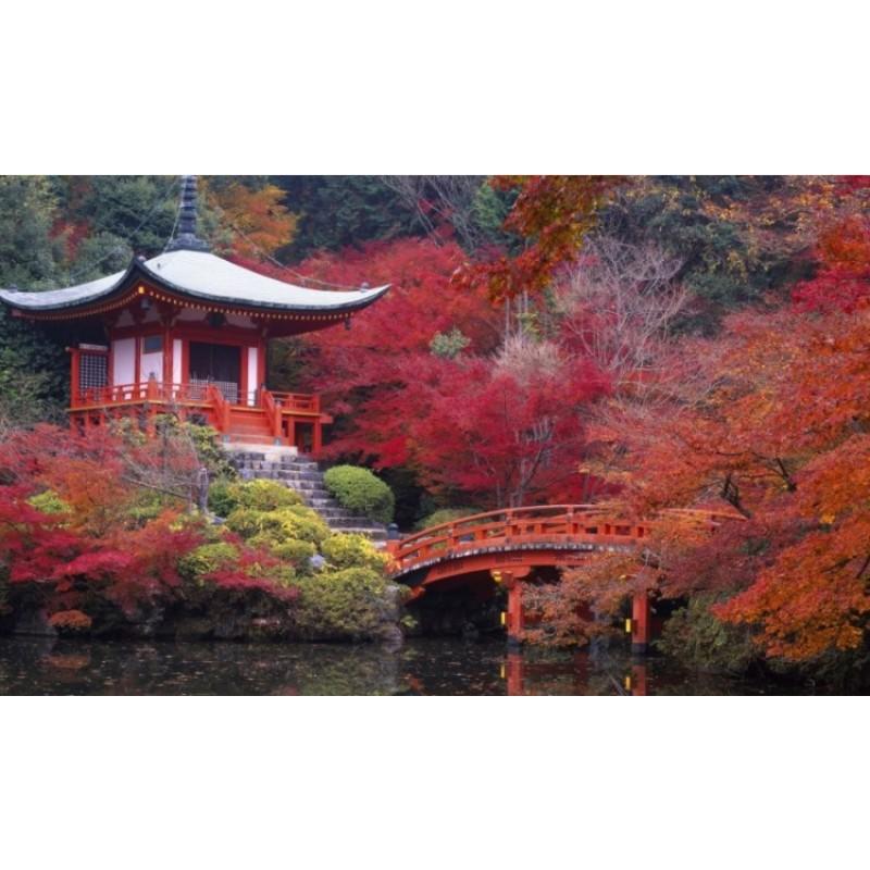Майские каникулы в Японии из Москвы - фото 2 - 001.by
