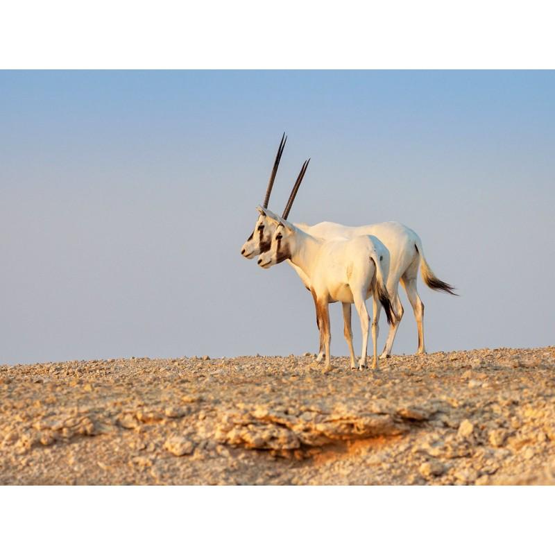 Экскурсия на западное побережье Катара - фото 4 - 001.by