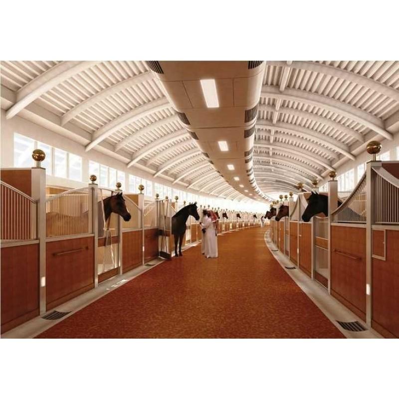 Аль Шакаб: экскурсия к чистокровным арабским лошадям - фото 2 - 001.by