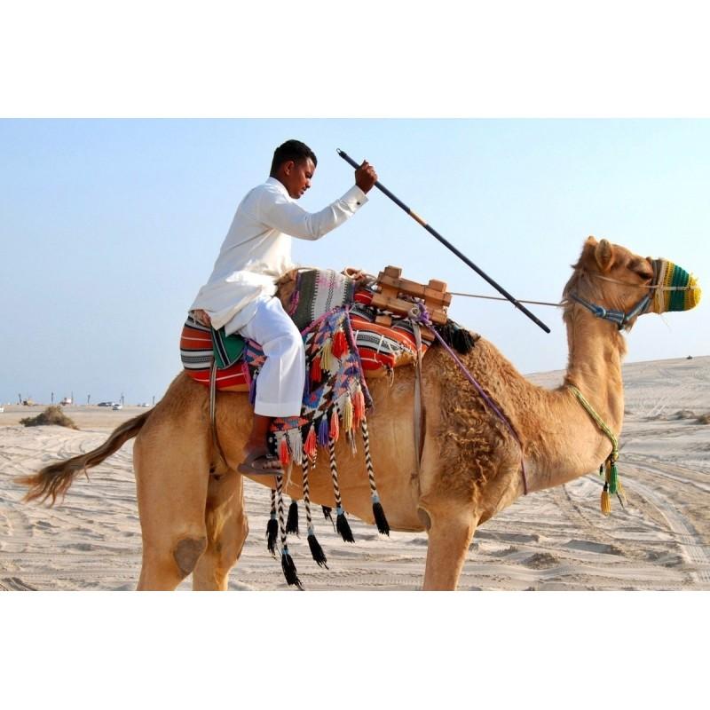 Сафари в пустыне на целый день с обедом - фото 3 - 001.by