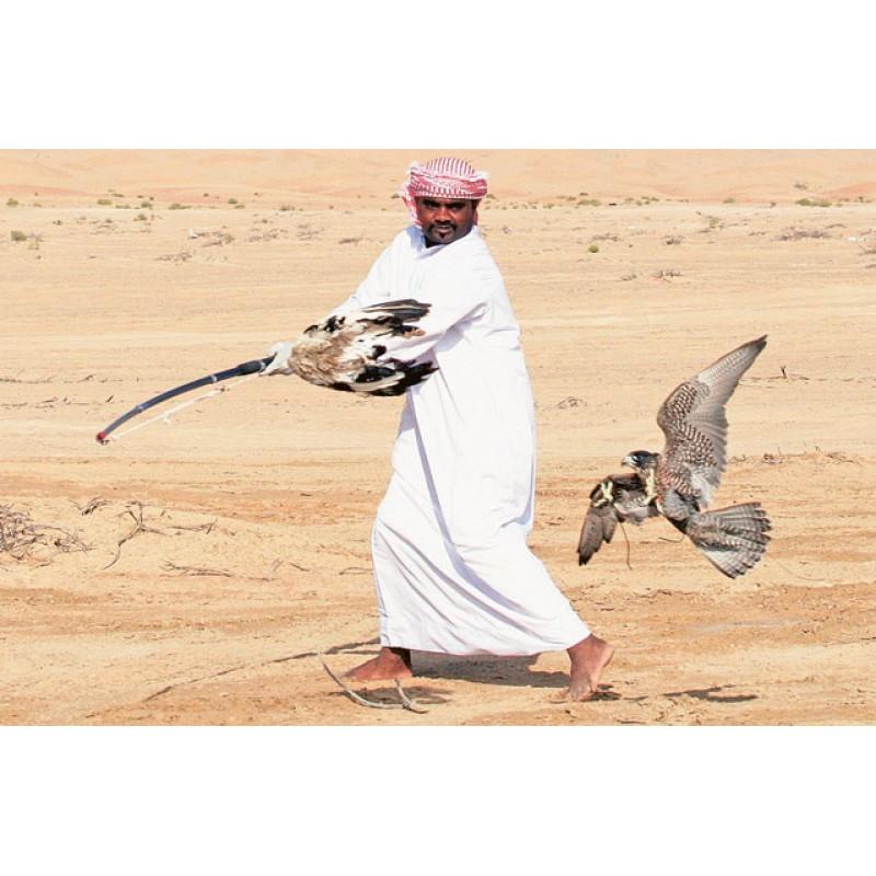 Соколиная охота в Катаре - фото 3 - 001.by