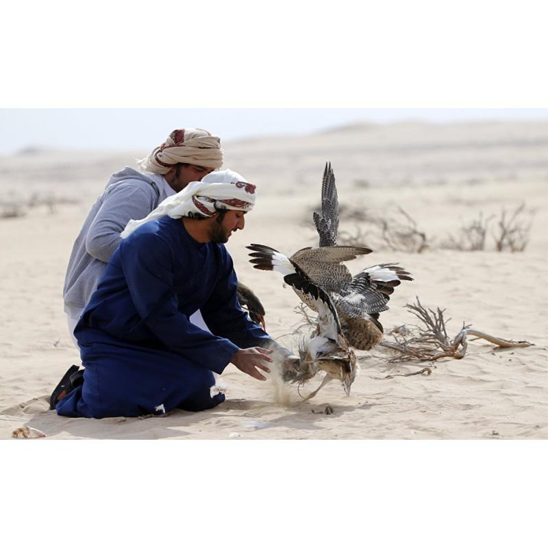 Соколиная охота в Катаре - фото 4 - 001.by