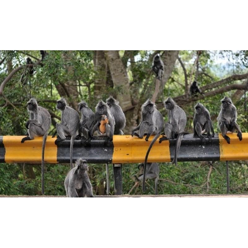 Пещеры Бату, индуистский храм и обезьяны - фото 3 - 001.by
