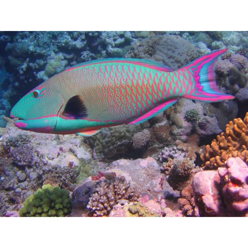 Мальдивы. Природные редкости Мальдив - фото 3 - 001.by