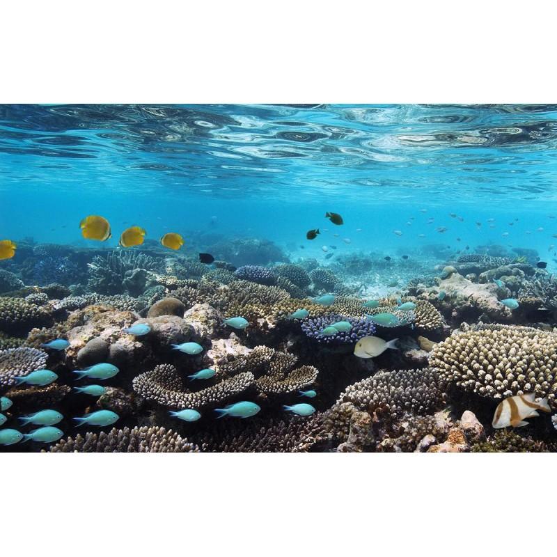 Из Шри-ланки на Мальдивы! - фото 3 - 001.by
