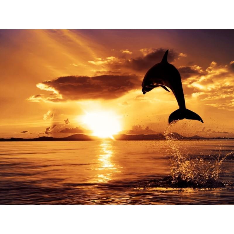 Экскурсия «Закат с дельфинами» - фото 4 - 001.by