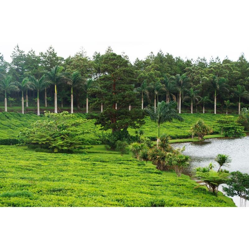 Чайная дорога и посещение природного заповедника La Vanille