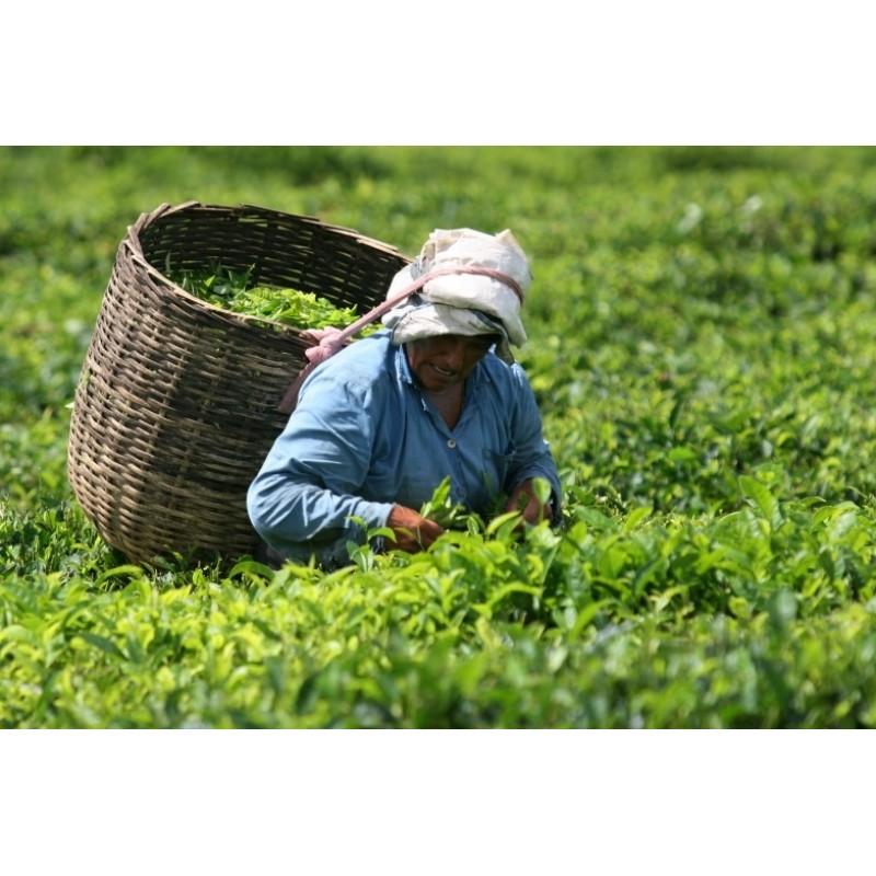 Чайная дорога и посещение природного заповедника La Vanille - фото 2 - 001.by