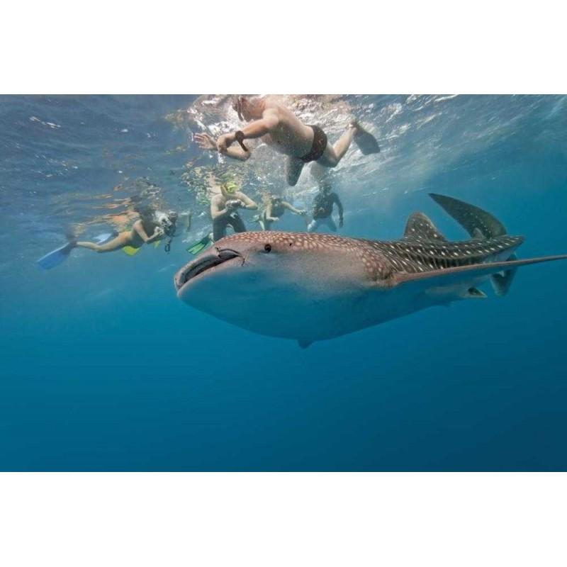 Плавание с китовыми акулами  - фото 3 - 001.by