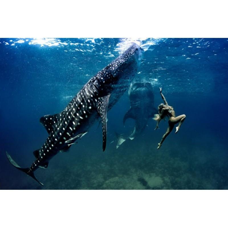 Плавание с китовыми акулами  - фото 4 - 001.by
