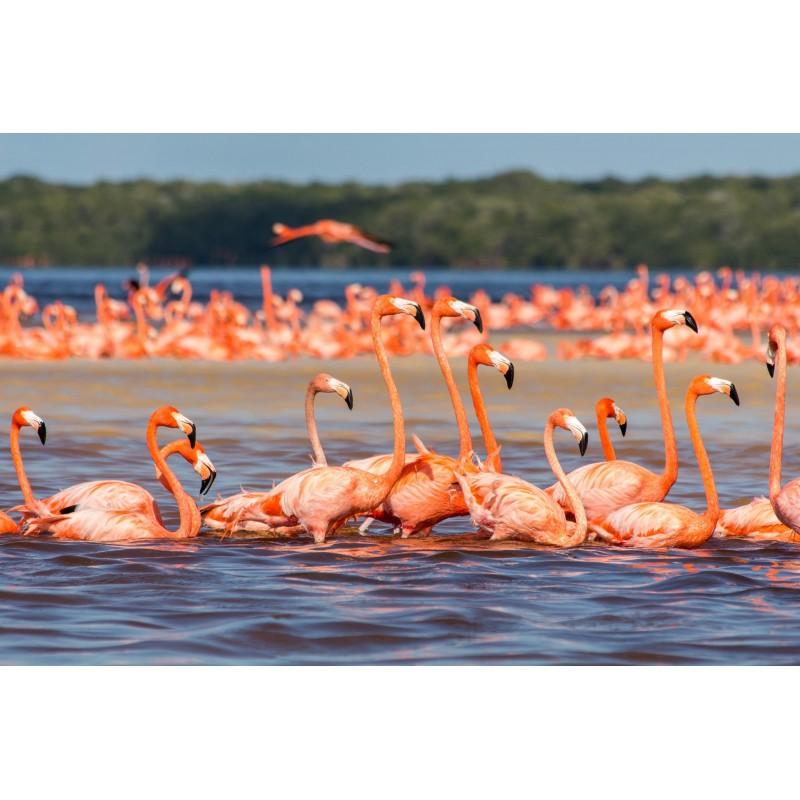 Рио Лагартос, Розовые Озёра и Вальядолид