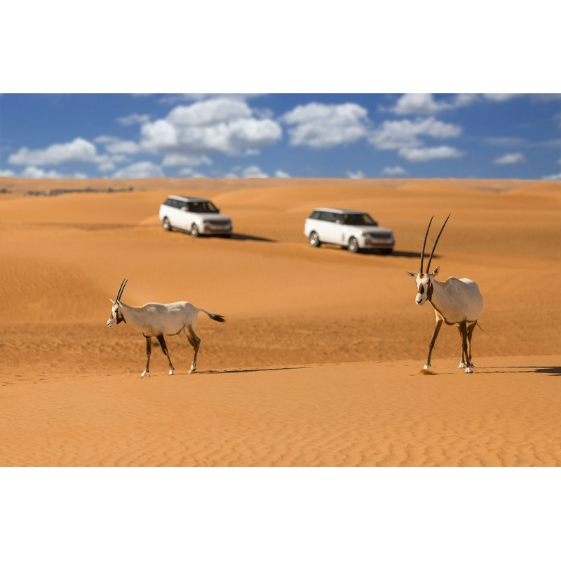 Cафари в пустыне: развлечение для авантюристов всех возрастов - фото 4 - 001.by