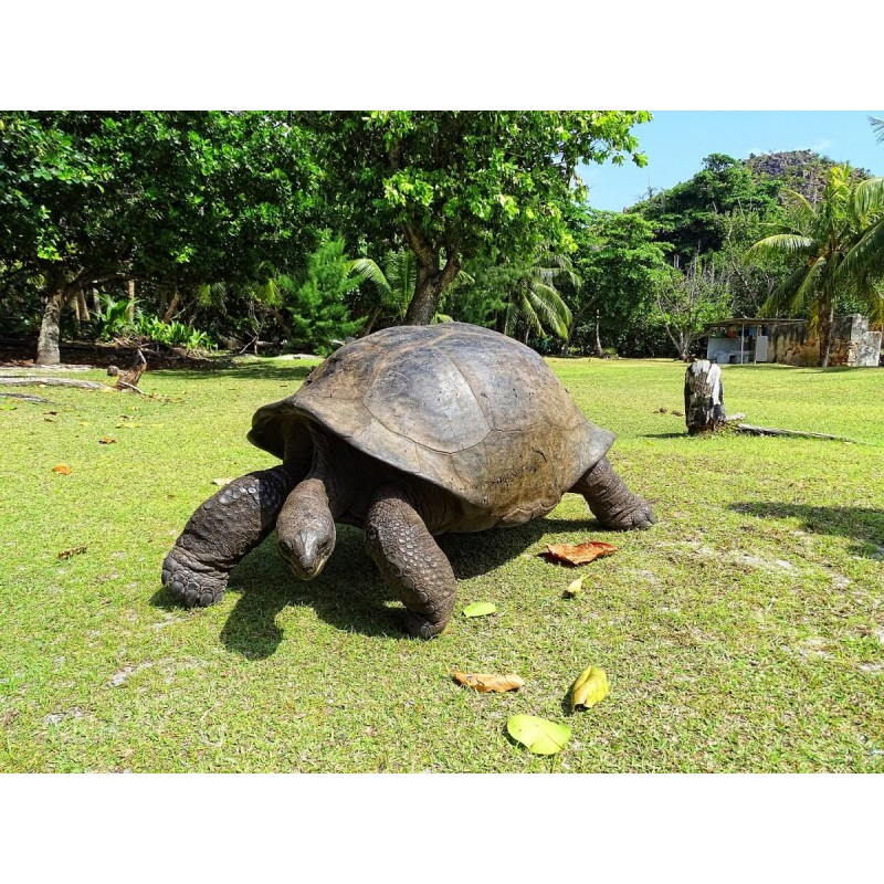 Экскурсия по острову Праслин - фото 2 - 001.by