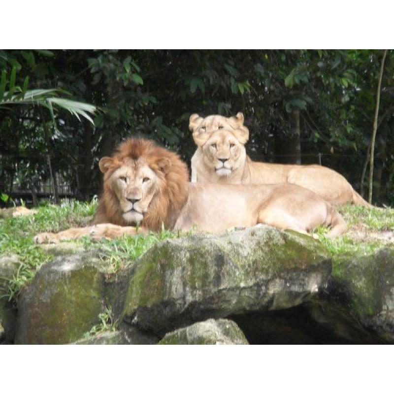 Зоопарк в Сингапуре - фото 2 - 001.by