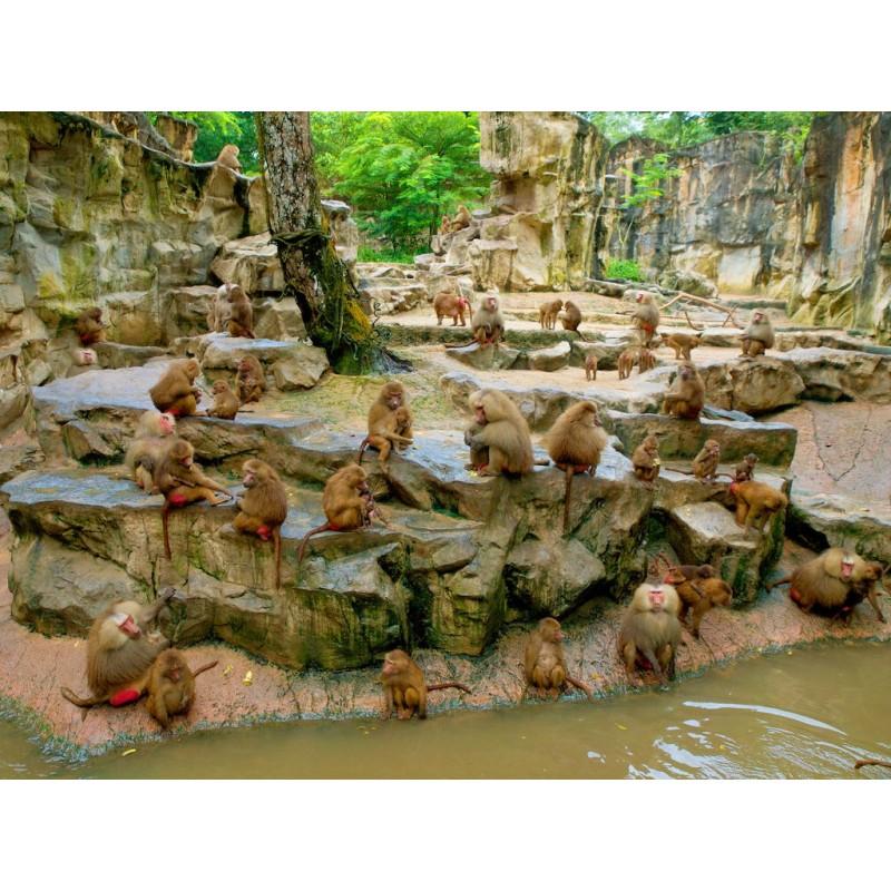 Зоопарк в Сингапуре - фото 4 - 001.by