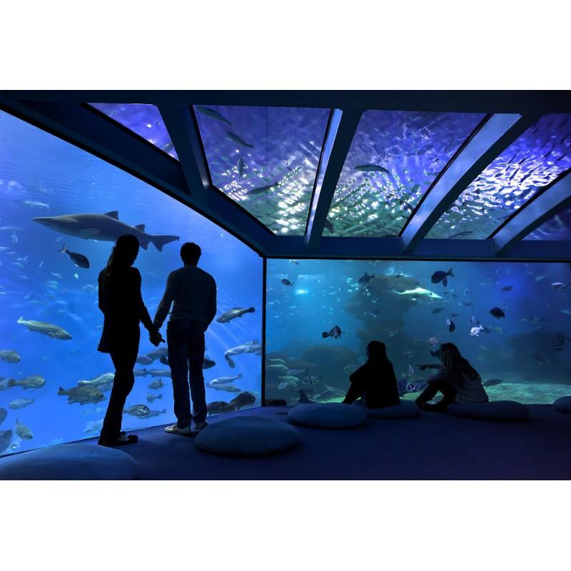 Экскурсия в Океанариум Palma Aquarium на Майорке  - фото 2 - 001.by