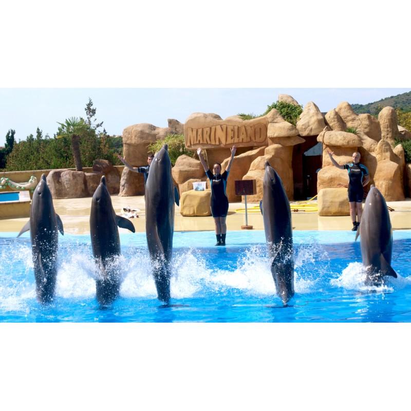 Морской зоопарк и дельфинарий Marineland (Майорка) - фото 4 - 001.by