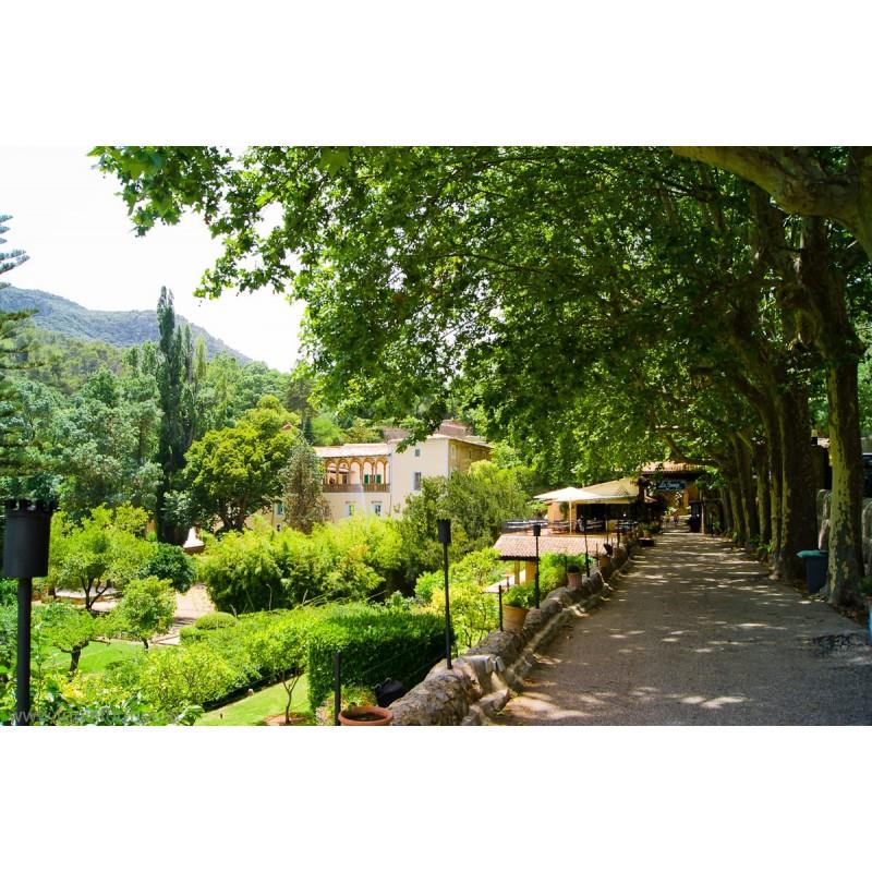 Вальдемосса и Ла-Гранха: резиденция муз на земле (о. Майорка) - фото 3 - 001.by