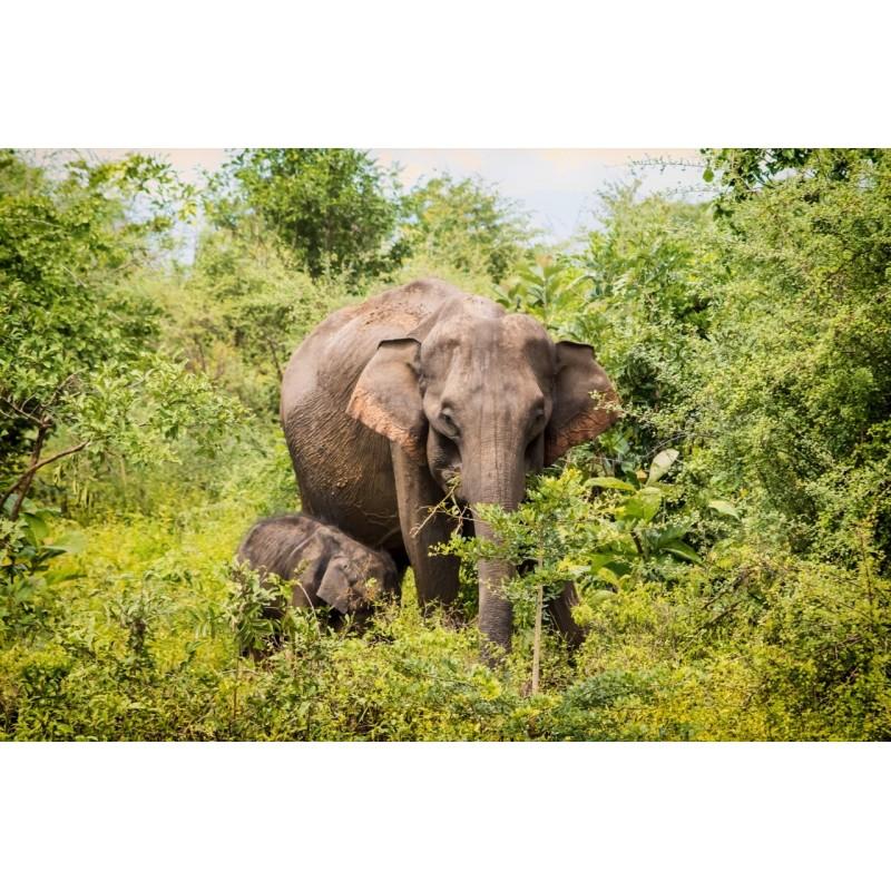 Экскурсия в национальный парк Удавалава