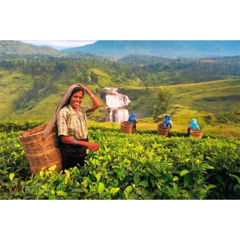 Культурное наследие Шри Ланки + отдых на побережье - фото 2 - 001.by