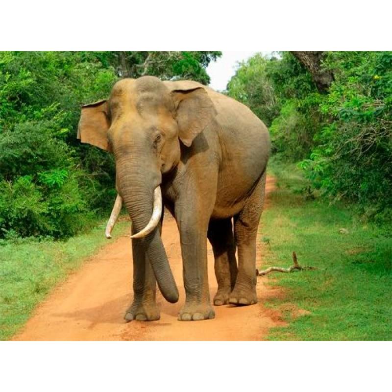 Культурное наследие Шри Ланки + отдых на побережье - фото 4 - 001.by