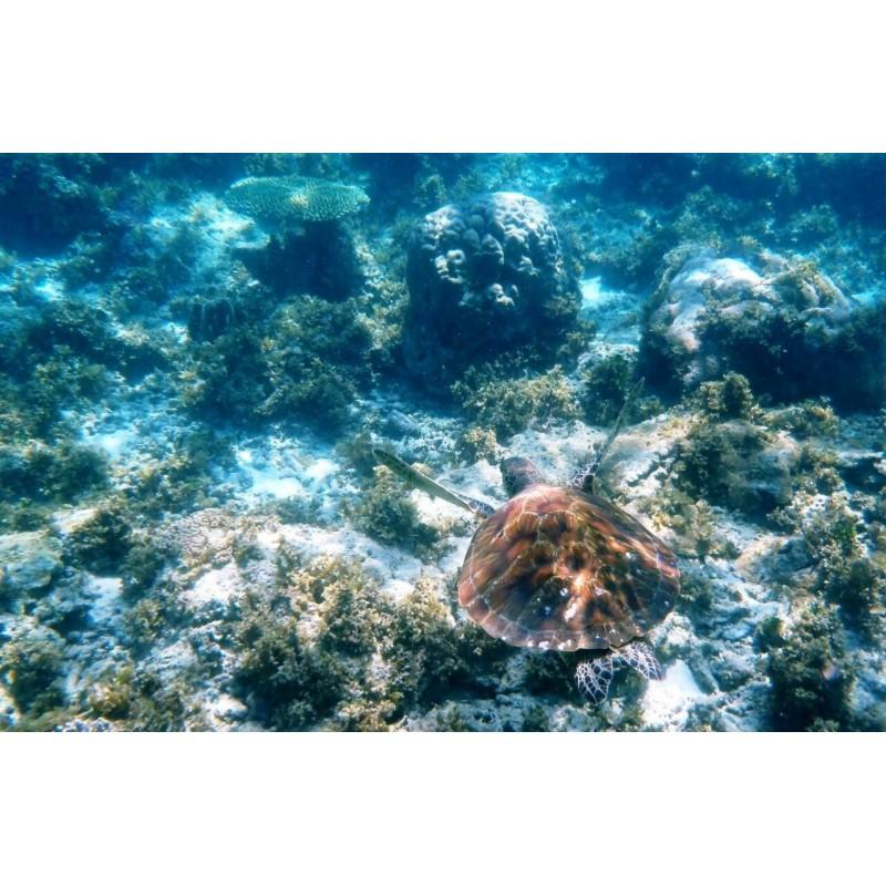 Остров Призон - фото 3 - 001.by