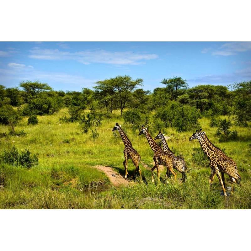 Сафари на материковую Танзанию
